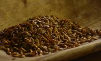 P seeds